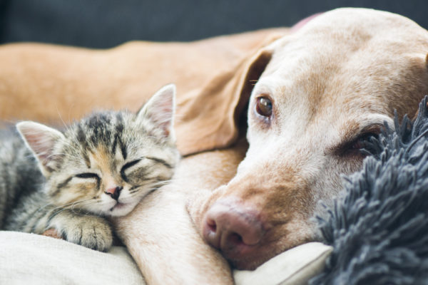 Dog and small cat laying on a couch