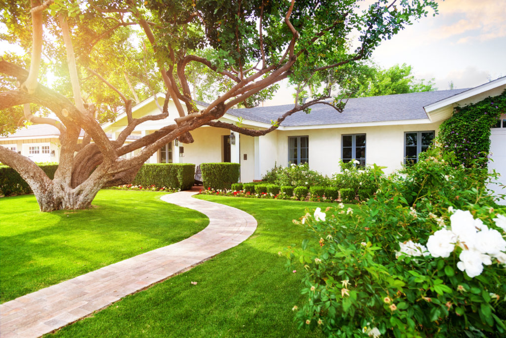 Beautiful white color single family home in Phoenix, Arizona USA with big green grass yard, large tree and roses